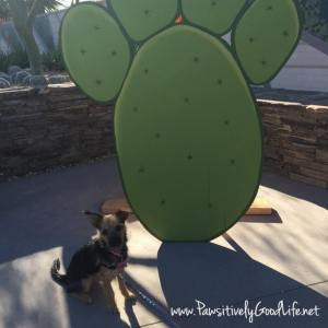 Bella @ Dogs' Day in the Garden, Phoenix Botanical Garden