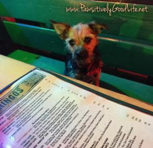 Bella hanging out at Dos Gringos